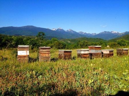 Visite du théâtre aux abeilles à la miellerie des Clauses à Montseret