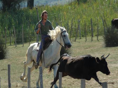 La Camargue à Narbonne spectacle équestre et taurin