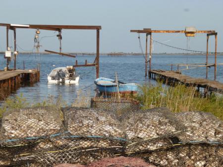 Découverte et savoir faire sur l'étang de Thau