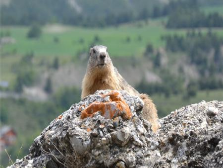 Bon cadeau – Observation de la nature