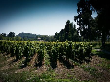 Carcassonne et la route des vins Visite dégustation au domaine