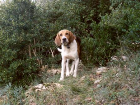 Séjour chasse au sanglier en Hautes Corbières