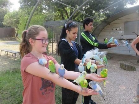 Scolaire - Visite pédagogique et atelier - Le parc australien à Carcassonne
