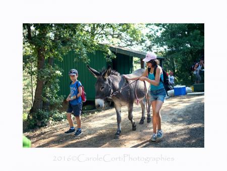 Balad'âne : Séjour estival nature et balade pour enfants de 8 à 11 ans