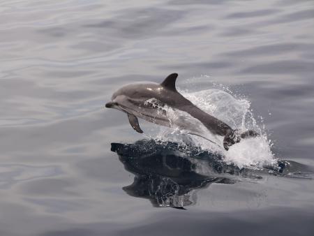 Observation de baleines et dauphins en Méditerranée