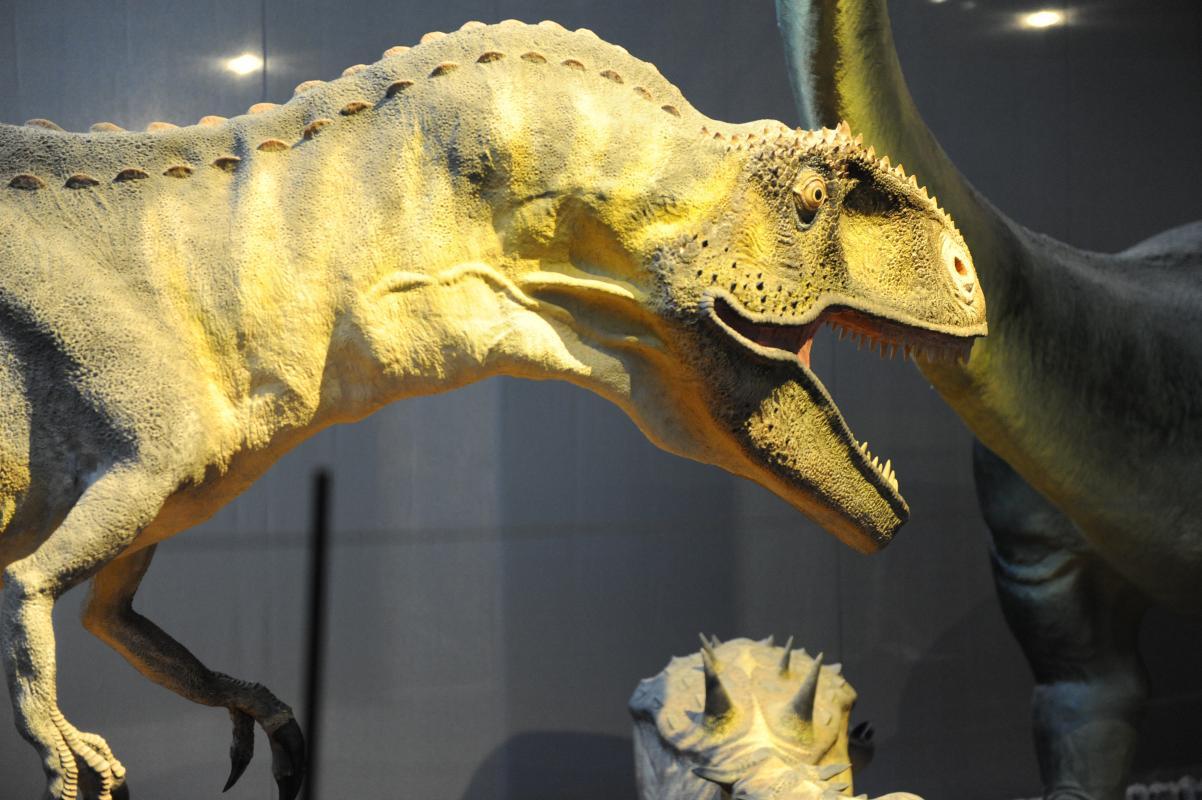 Visite du musée des dinosaures à Espéraza